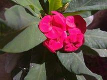 Bella luminosità di manifestazione di fiori di vita fotografia stock libera da diritti