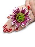 Bella mano con il manicure perfetto di colore rosso del chiodo Fotografie Stock Libere da Diritti