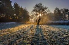 Bella mattina con gelo sulle piante Paesaggio d'autunno Fotografia Stock Libera da Diritti