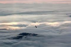 Bella mattina nebbiosa Fotografia Stock Libera da Diritti