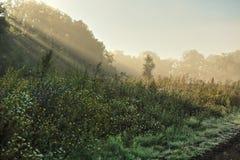Bella mattina nebbiosa fuori della città di estate Fotografie Stock