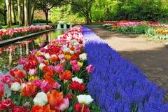 Bella mattina piena di sole ai giardini di Keukenhof Fotografie Stock Libere da Diritti