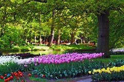 Bella mattina piena di sole ai giardini di Keukenhof Immagini Stock