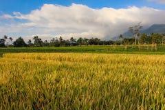 Bella montagna del paesaggio con il campo di padi Immagini Stock