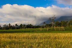 Bella montagna del paesaggio con il campo di padi Fotografia Stock Libera da Diritti