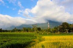 Bella montagna del paesaggio con il campo di padi Immagine Stock