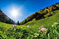 Bella montagna di Bucegi del paesaggio della Romania nella caduta immagine stock