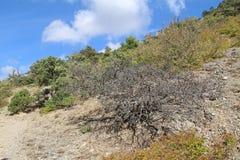 Bella natura al falco di Socol Sokol della montagna in Crimea Fotografie Stock Libere da Diritti