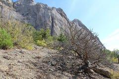 Bella natura al falco di Socol Sokol della montagna in Crimea Immagine Stock Libera da Diritti