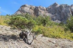 Bella natura al falco di Socol Sokol della montagna in Crimea Fotografia Stock Libera da Diritti