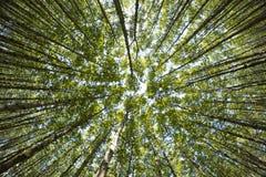 Bella natura alla mattina nella foresta nebbiosa della molla con il sole Immagini Stock Libere da Diritti