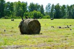 Bella natura Altaya Immagini Stock