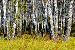 Bella natura Altaya fotografie stock libere da diritti