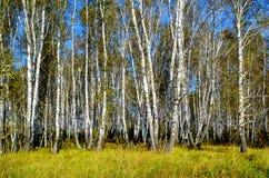 Bella natura Altaya fotografia stock libera da diritti