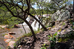 Bella natura brasiliana Fotografie Stock Libere da Diritti