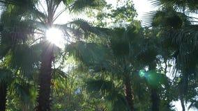 Bella natura del fogliame fresco della palma della foresta della giungla sotto il sole luminoso del clima tropicale 4K archivi video