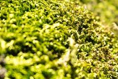 Bella natura del muschio di Forest Park della molla verde del fondo Fotografia Stock