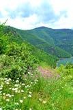 Bella natura della montagna di estate immagine stock
