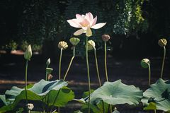 Bella natura di estate con il fiore immagine stock libera da diritti