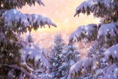 Bella natura di inverno Fotografie Stock Libere da Diritti