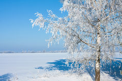 Bella natura, inverno fotografia stock libera da diritti