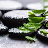 Bella natura morta della stazione termale della felce verde di adianto del ramoscello sul basa di zen Fotografie Stock