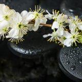 Bella natura morta della stazione termale delle pietre di zen con le gocce Immagini Stock