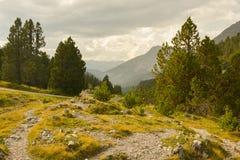 Bella natura nel parco di Natinal dello svizzero vicino a Ofenpass Fotografie Stock