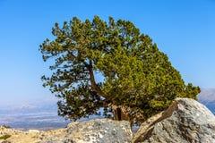 Bella natura variopinta Fotografia Stock