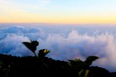 Bella nebbia del mare a tempo la mattina al punto di vista di Berk della vasca di Phu Fotografie Stock Libere da Diritti