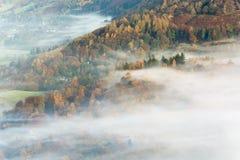 Bella nebbia prolungata sopra Autumn Colored Trees Immagine Stock Libera da Diritti