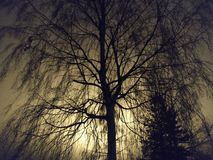 <b>Bella notte</b> immagini stock libere da diritti