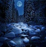 Bella notte di inverno Fotografia Stock Libera da Diritti