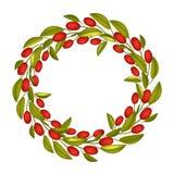 Bella Olive Wreath o Olive Crown con frutta rossa Fotografie Stock Libere da Diritti