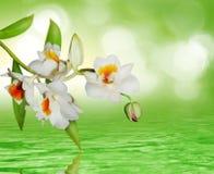 Bella orchidea fotografia stock