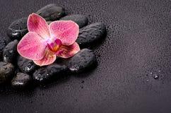 Bella orchidea Immagine Stock