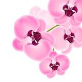 Bella orchidea Fotografie Stock