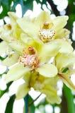 Bella orchidea fotografia stock libera da diritti