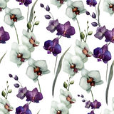 Bella orchidea flower7 Immagine Stock