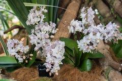 Bella orchidea nell'interno della stanza Immagine Stock Libera da Diritti