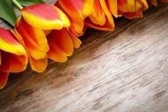 Bella orchidea sul bordo di legno Immagine Stock Libera da Diritti