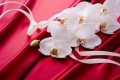 Bella orchidea sul raso rosso fotografia stock