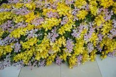 Bella orchidea, Tailandia Immagine Stock