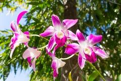 Bella orchidea viola Fotografia Stock