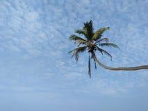 Bella palma con il fondo del cielo della foto dello Sri Lanka Fotografie Stock Libere da Diritti