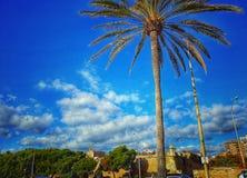 Bella Palma de Mallorca Immagine Stock