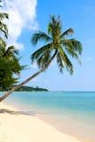 Bella palma sopra la spiaggia bianca della sabbia fotografia stock libera da diritti