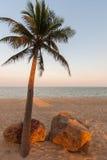 Bella palma sulla spiaggia Fotografia Stock
