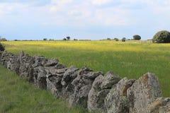 Bella parete di pietra che separa i campi e gli animali fotografia stock