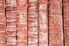Bella parete rossa della noce di cocco Immagini Stock